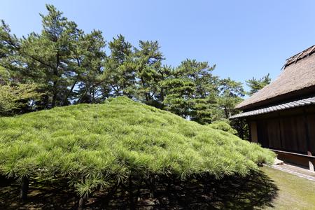 japanese tea garden: Japanese garden with tea house