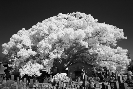 infrared: infrared photography