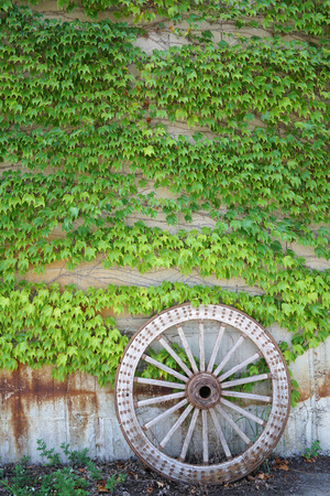 Antique and weathered wood cart wheel with vine green leaves background Stock Photo