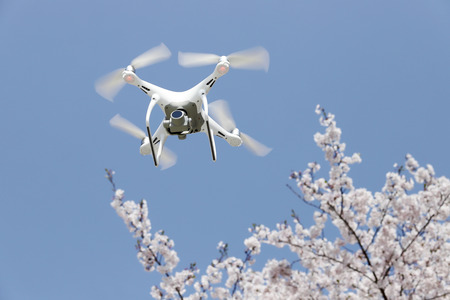 Drone flying in the air, with beautiful cherry blossom or sakura and blue sky Stock Photo