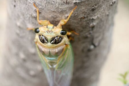 Macro image of a newly cicada molting process Banco de Imagens