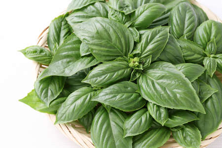 Sweet green basil leaves in a bamboo basket, on white background