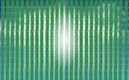 landscape of seedlings in rice fields