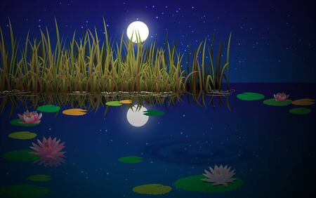 landscape of swamp in the night