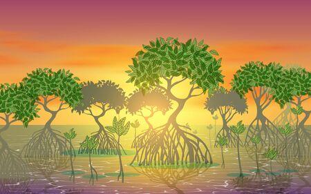 landscape of mangove forest on the beach in sunset Reklamní fotografie - 129011848