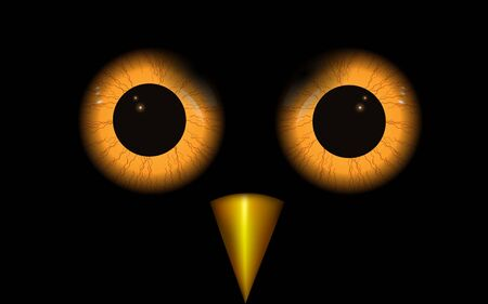 Yellow eyes of bird in the night
