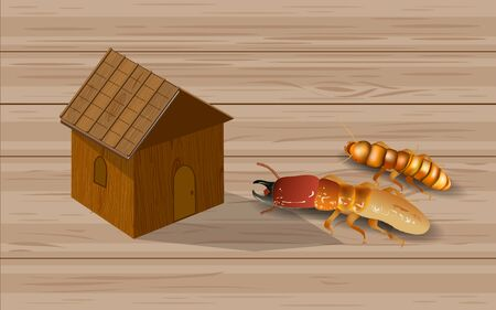 Termites and wooden houses Vector Illustration