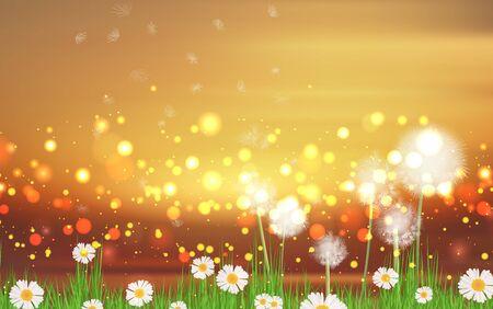 Blowball dandelion in the meadow in morning