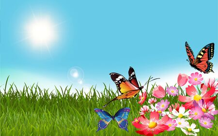 butterfly on colorful flower in the meadow