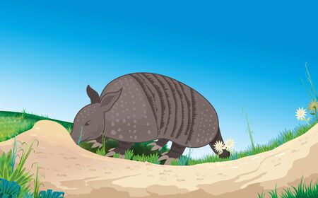 Armadillo at the ant nest on the lawn Иллюстрация
