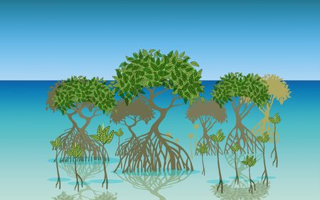 landscape of mangrove forest at the beach in daytime Illustration