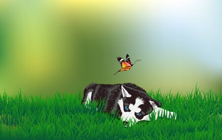 Husky at the meadow Stock Vector - 129606685