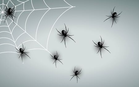 black spider on the white wall Illustration