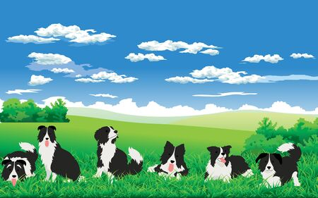 Border collie at the meadow Illustration
