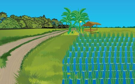 landscape of rice field in th daytime