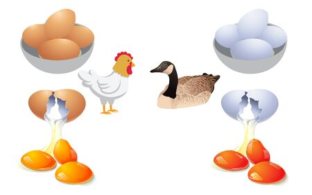 Chicken eggs and duck eggs on white background