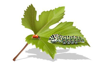 Caterpillar and ladybug on the Leaves Ilustração