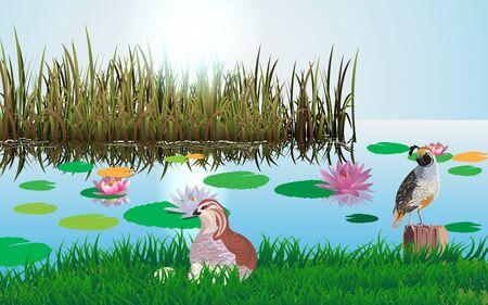partridge bird at the swamp Illusztráció