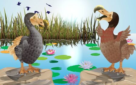 dodo birds at the swamp 스톡 콘텐츠 - 129701659