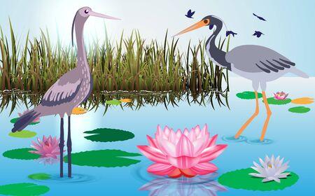 herons at the swamp