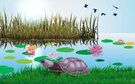 Schildkröte im Sumpf tagsüber