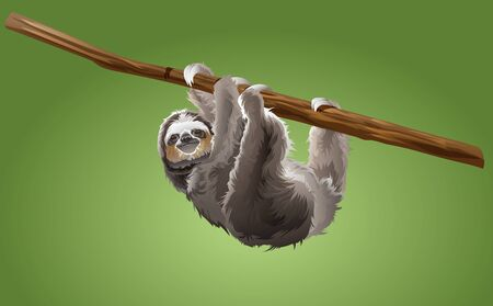 sloth on tree branch in the jungle  イラスト・ベクター素材