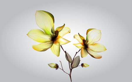 dry yellow orcid on the white background 일러스트