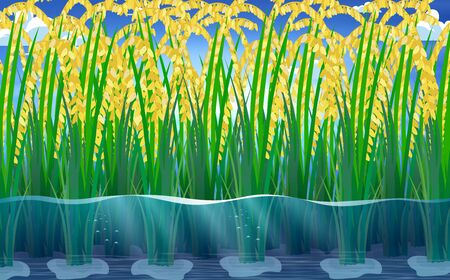 view of rice plants under water in rice fields Illustration