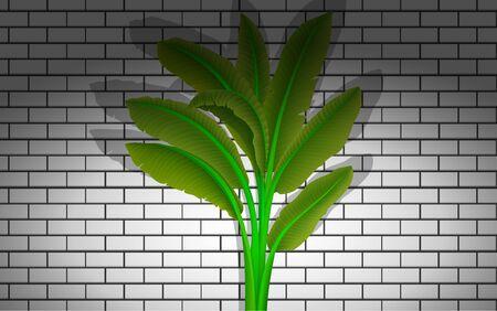 banana tree at the white brick wall background Иллюстрация