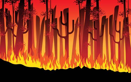 fire is burning in the forest in the night