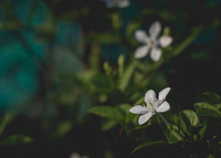 selectivity: Beautiful white flowers in Vintage Styled