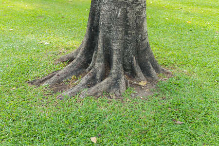 Gnarled tree roots photo