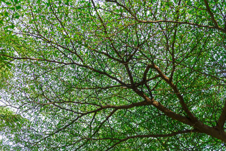 many branches: big tree and many branches Stock Photo