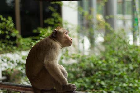 potrait: Potrait image of monkey macaque on tree in Thailand Stock Photo