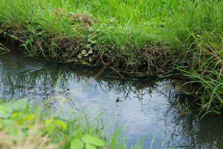 farmlands: stream of water for agriculture purpose running through the paddy farmlands Stock Photo