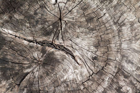 cross section: Cross section of wood bark texture , wood rings Grunge Stock Photo