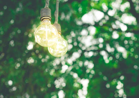 classic light bulb: classic light bulb hanging on tree background (vintage effect)