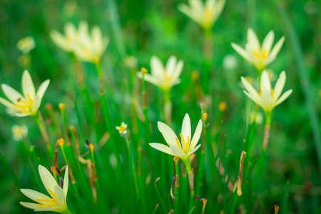 Little yellow flowers in the green garden