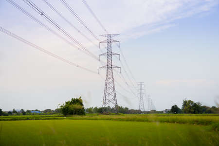 Picture of the green and gold rice fields with high voltage tower background Zdjęcie Seryjne
