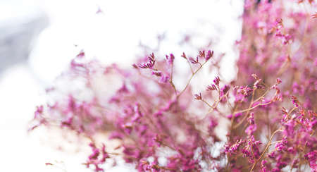 picture of the boutique purple dried flower in the vase for home decoration