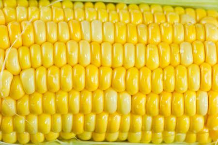 Fresh corn  photo