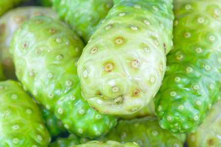noni: Noni fruits Stock Photo