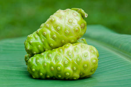 Noni fruit on banana leaf  photo