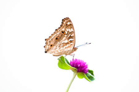 butterfly on white baackground Stock Photo
