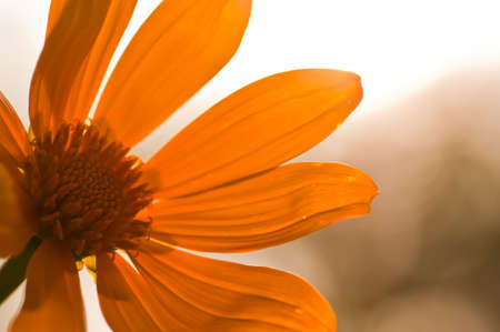 Sunshine background with sunflower details   photo