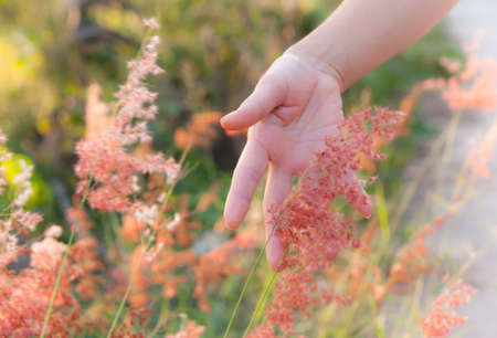 hand with grass  photo