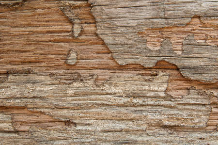 Closeup of texture of termite damaged wood  Stock Photo