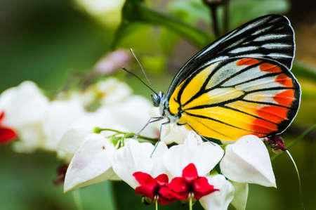 close-up of a butterfly on white flower Stock Photo