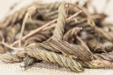 ulceras: �rbol de tornillo de las Indias Orientales Helicteres isora ??L, llevar a ebullici�n y la bebida puede tener un sabor amargo similar al t�
