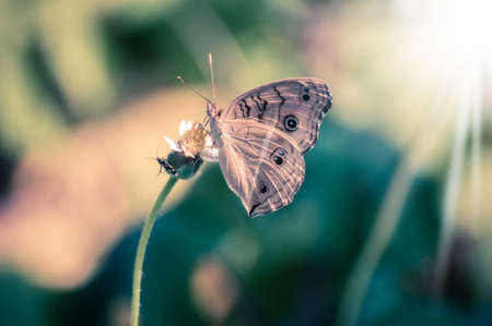 forewing: butterfly